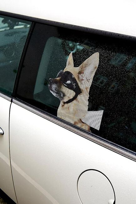 Urban Outfitters - ASSORT Dog Car Decal