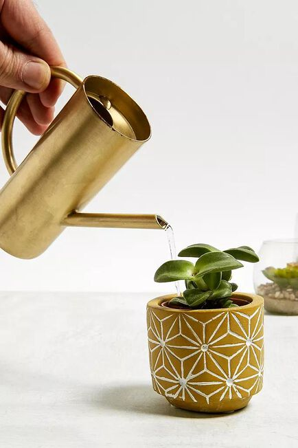 Urban Outfitters - Assorted Roxy Gold Mini Watering Can