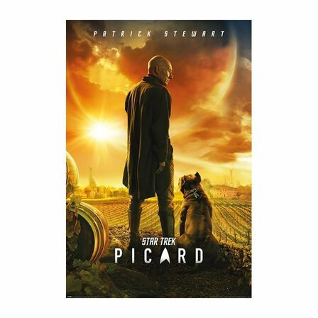 PYRAMID POSTERS - Pyramid Posters Star Trek Picard Picard Number One